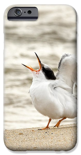 Juvenile Common Tern Square iPhone Case by Bill  Wakeley