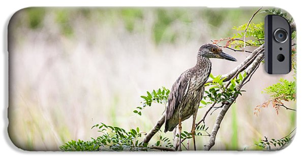 Juvenile Wall Decor iPhone Cases - Juvenile Yellow Crowned Night Heron iPhone Case by Zoe Ferrie