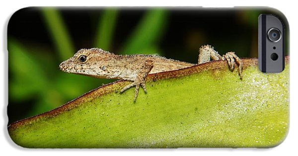 Lynda Dawson-youngclaus Photographer iPhone Cases - Juvie Brown Anole iPhone Case by Lynda awson-Youngclaus