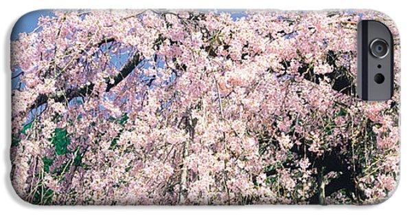 Kyoto iPhone Cases - Jyoshokou-ji Kyoto Japan iPhone Case by Panoramic Images