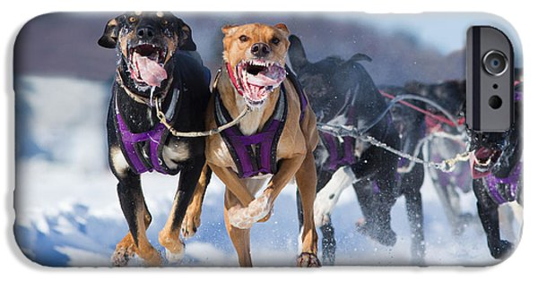 Husky iPhone Cases - K9 Athletes iPhone Case by Mircea Costina Photography