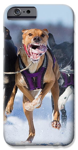 K9 Athletes iPhone Case by Mircea Costina Photography