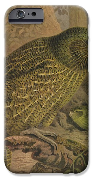 Ornithology iPhone Cases - Kakapo iPhone Case by J G Keulemans