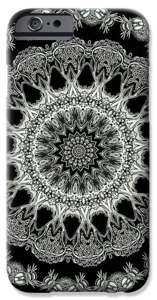 Kaleidoscope Ernst Haeckl Sea Life Series Black and White Set 2 iPhone Case by Amy Cicconi