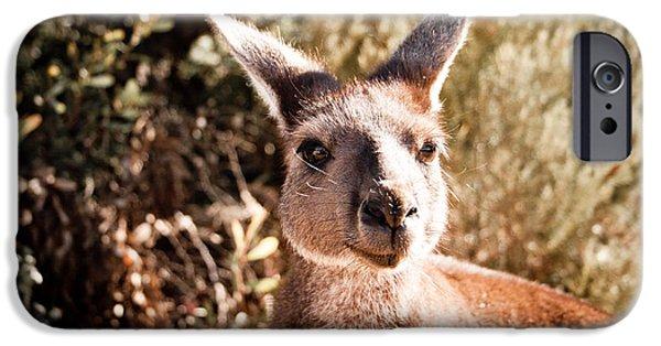 Kangaroo Digital Art iPhone Cases - Kangaroo iPhone Case by Lisa Heppner