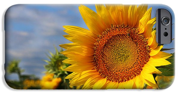 Gingrich Photography iPhone Cases - Kansas Sunflowers - 3304 iPhone Case by Gary Gingrich Galleries