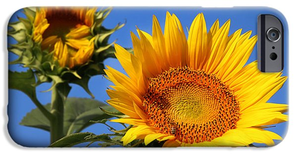 Agriculture iPhone Cases - Kansas Sunflowers-2488 iPhone Case by Gary Gingrich Galleries