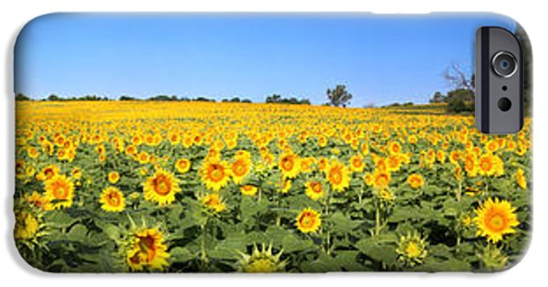 Agriculture iPhone Cases - Kansas Sunflowers Pano 4 iPhone Case by Gary Gingrich Galleries