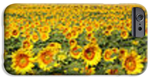 Agriculture iPhone Cases - Kansas Sunflowers Pano 8C  iPhone Case by Gary Gingrich Galleries