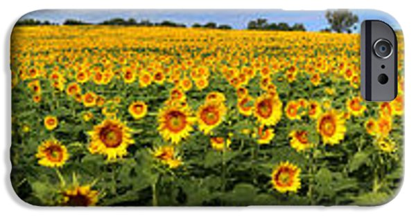 Agriculture iPhone Cases - Kansas Sunflowers Pano 9C iPhone Case by Gary Gingrich Galleries