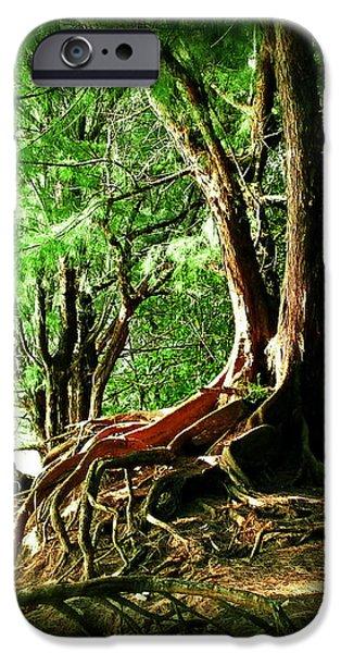 Tree Art Print iPhone Cases - Kauai Trees iPhone Case by Joseph J Stevens
