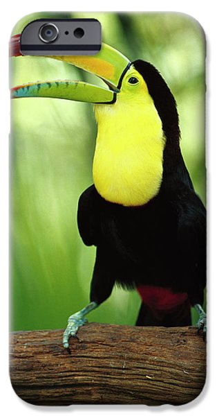 Toucan iPhone Cases - Keel-billed Toucan  iPhone Case by Gerry Ellis