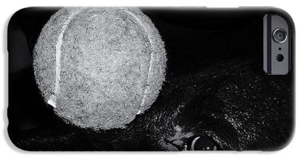 Dog And Tennis Ball iPhone Cases - Keep Your Eye On The Ball iPhone Case by Roger Wedegis