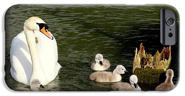 Swans... iPhone Cases - Keeping A Watchful Eye iPhone Case by Linsey Williams