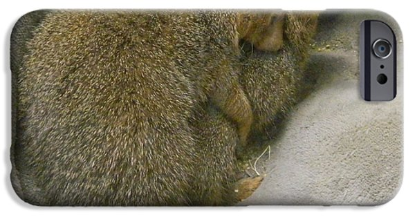Smithsonian iPhone Cases - Keeping Warm - Dwarf Mongooses iPhone Case by Emmy Marie Vickers