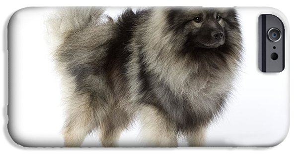 Loup iPhone Cases - Keeshond Dog iPhone Case by Jean-Michel Labat