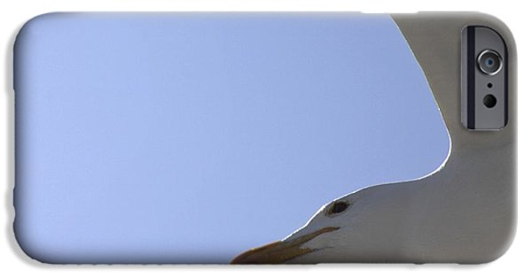 Flying Seagull iPhone Cases - Kelp Gull In Flight iPhone Case by Gerry Pearce