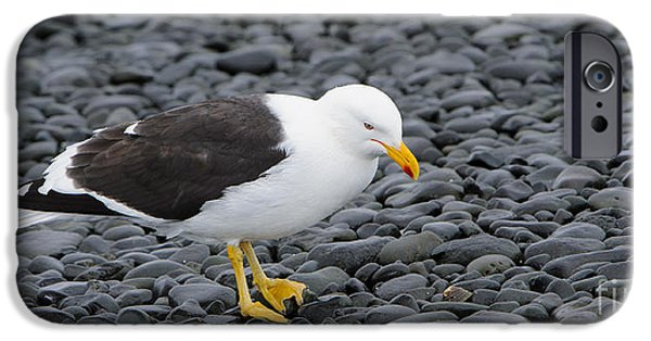 Sea Birds iPhone Cases - Kelp Gull iPhone Case by John Shaw