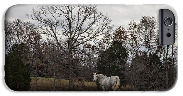 The Horse iPhone Cases - Kentucky horse  iPhone Case by John McGraw