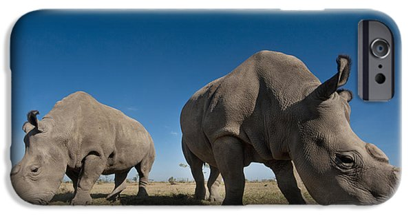 Simple Beauty In Colors iPhone Cases - Kenya, Great Northern White Rhinos iPhone Case by Ian Cumming