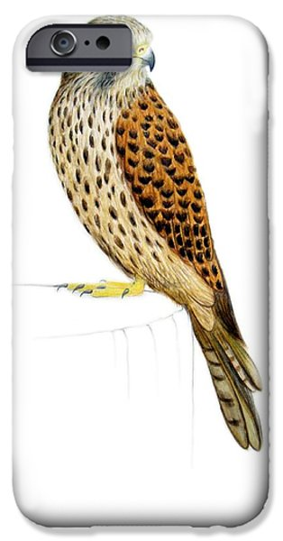 Animal Drawings iPhone Cases - Kestrel iPhone Case by Ele Grafton