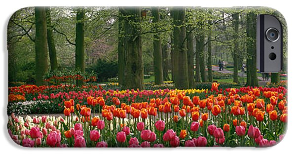 Tulips iPhone Cases - Keukenhof Garden, Lisse, The Netherlands iPhone Case by Panoramic Images