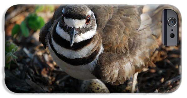 Birds iPhone Cases - Killdeer Mom iPhone Case by Skip Willits