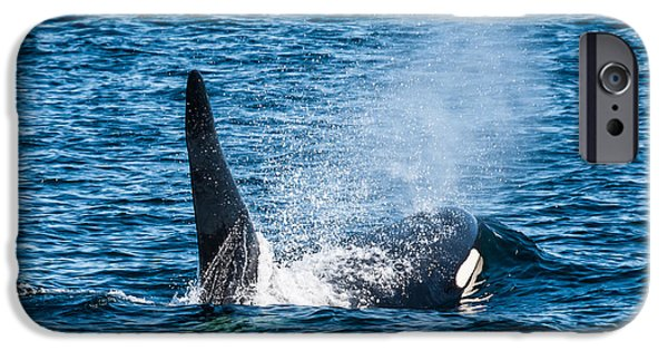 Canada Photograph iPhone Cases - Killer Whale in the wild iPhone Case by Puget  Exposure