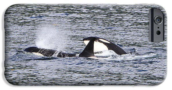 Sea Birds Pyrography iPhone Cases - Killer Whales Playing iPhone Case by Shoal Hollingsworth