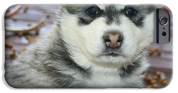 Husky iPhone Cases - Kindred iPhone Case by Joshua Sunday