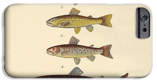 Arctic Drawings iPhone Cases - Kinds of trouts iPhone Case by Splendid Art Prints