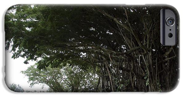 Tree Roots iPhone Cases - KING BANYAN TREE of HAWAII iPhone Case by Daniel Hagerman