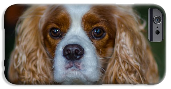 Recently Sold -  - Dog Close-up iPhone Cases - King Charles iPhone Case by Dale Powell