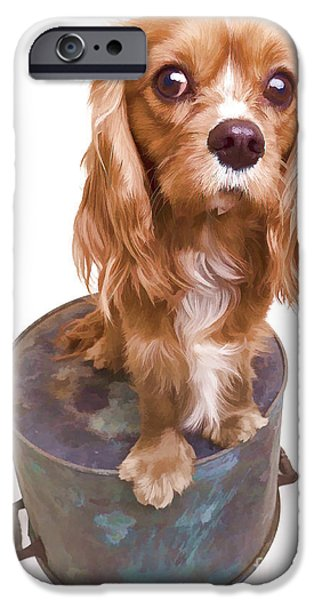 Vet iPhone Cases - King Charles Spaniel Puppy iPhone Case by Edward Fielding