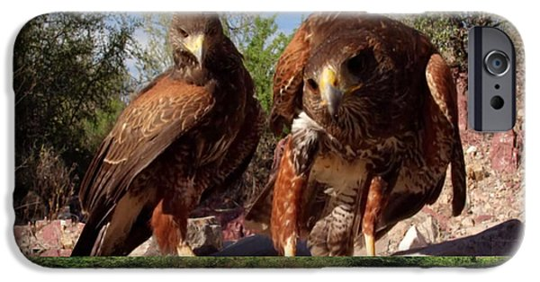 Electronic iPhone Cases - King Hawks Bird of Prey  from North America There are at least seventeen types of hawks in North Ame iPhone Case by Navin Joshi