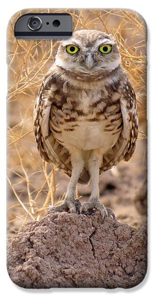 Baby Bird iPhone Cases - King of the Mountain iPhone Case by Renee Owens