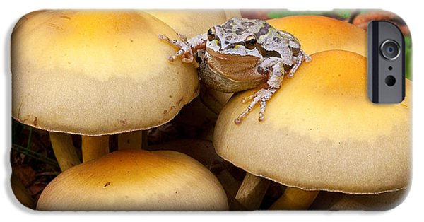 Anuran iPhone Cases - King of the toads iPhone Case by Jean Noren