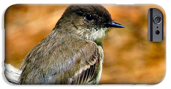 Michelle iPhone Cases - Kingbird Chillin iPhone Case by Michelle Milano