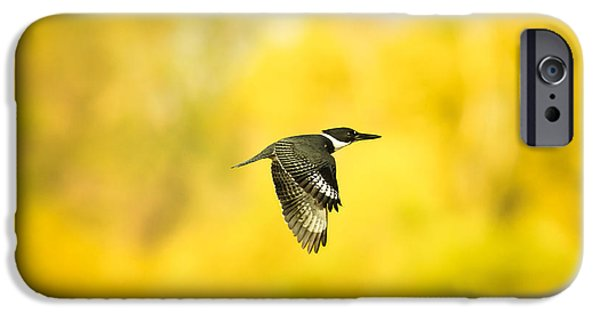 Cabin Window iPhone Cases - Kingfisher On Gold 2 iPhone Case by Robert Frederick