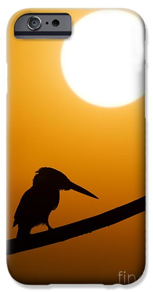 Patient iPhone Cases - Kingfisher Sunset Silhouette iPhone Case by Tim Gainey