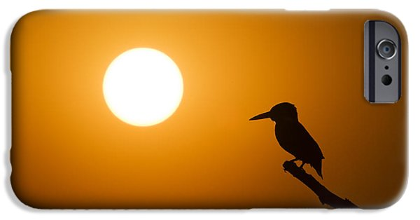 Ornithology iPhone Cases - Kingfisher Sunset iPhone Case by Tim Gainey