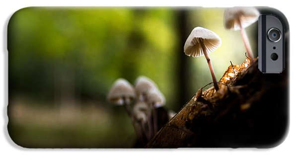 Mushrooms iPhone Cases - Kings Wood iPhone Case by Ian Hufton