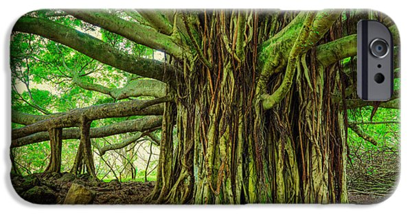 Roots iPhone Cases - Kipahulu Banyan Tree iPhone Case by Inge Johnsson