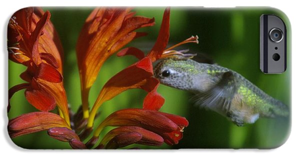 White House iPhone Cases - Kiss Of A Humming Bird iPhone Case by Jeff  Swan