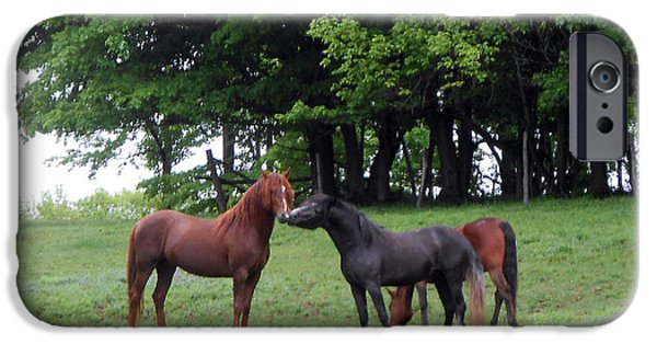 Paso Fino Stallion iPhone Cases - Kissing cousins- The Paso Fino Stallions iPhone Case by Patricia Keller