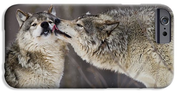 Wolf Picture Art iPhone Cases - Kissy Face iPhone Case by Wolves Only
