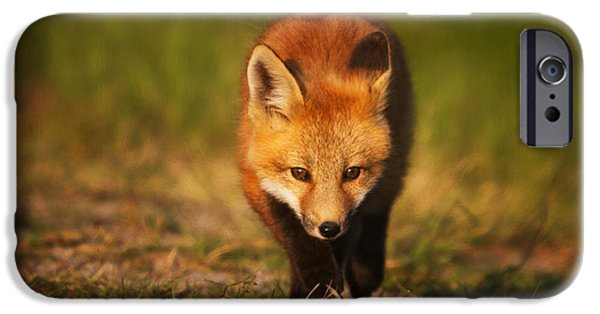 Fox Kit iPhone Cases - Kit on the Prowl iPhone Case by Mark Kiver