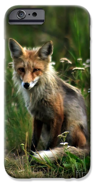 Haybale iPhone Cases - Kit Red Fox iPhone Case by Robert Bales