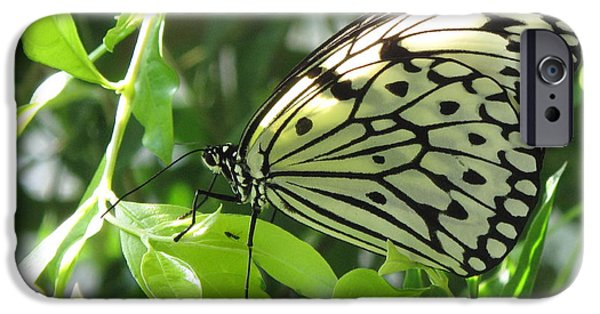 House iPhone Cases - Kite Butterfly on Leaf iPhone Case by Ann Willmore