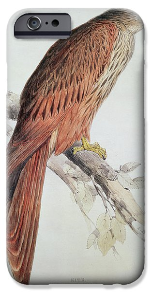Audubon iPhone Cases - Kite iPhone Case by Edward Lear